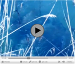 video_carpe